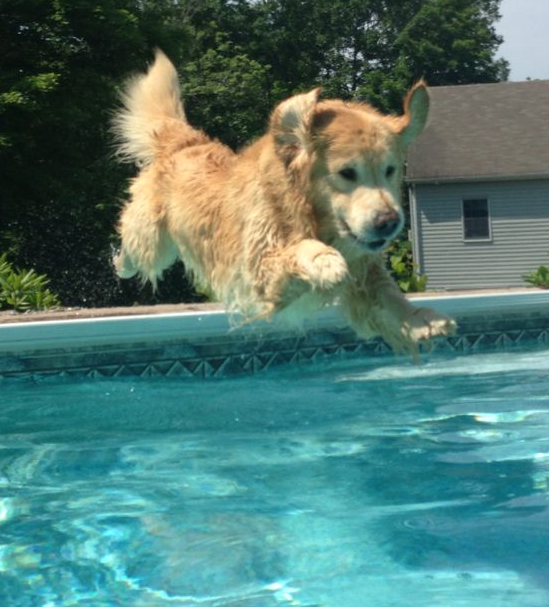 dog-pool-swimming