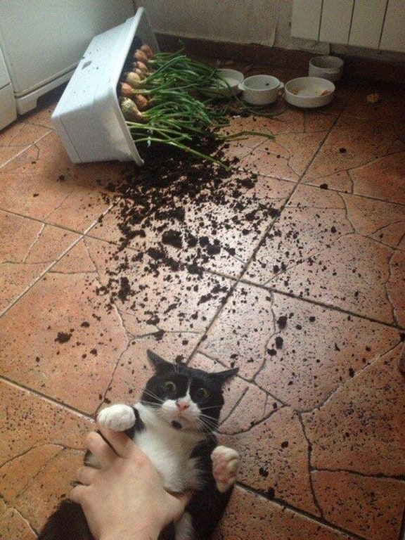 This cat caught red handed - yinyangmaster - http://bit.ly/2A8idoW