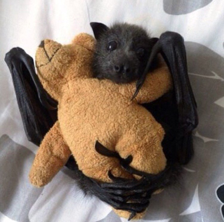 Bats like toys too - GeneReddit123 - http://bit.ly/2znN1Oi