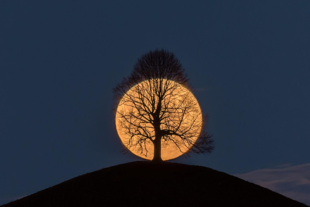 Full moon setting behind a lime tree on a hill - golden_an - http://bit.ly/2Bcp3e4