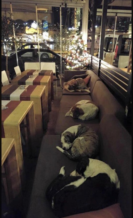 This coffee shop in Greece lets the stray dogs sleep inside every night after the customers leave. - ImmunosuppressivePip - http://bit.ly/2nQnTiK