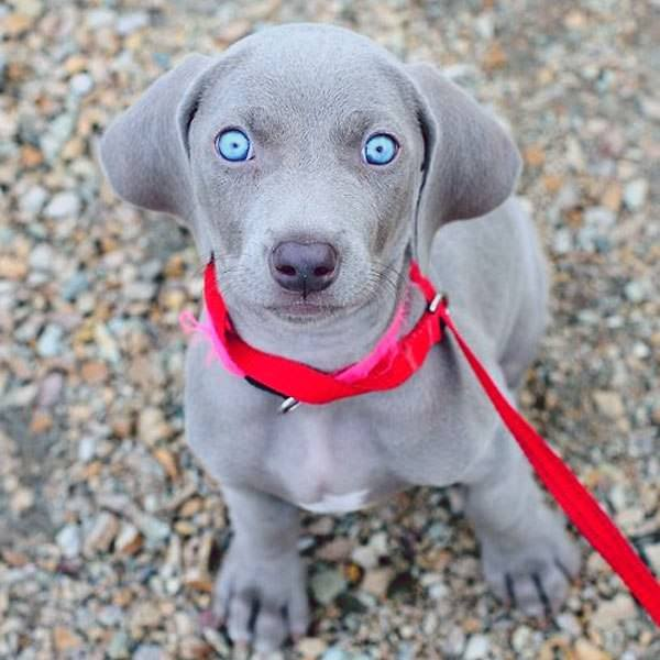 This extremely blue eyed puppy - leftthelightson - bit.ly2DKPDNk