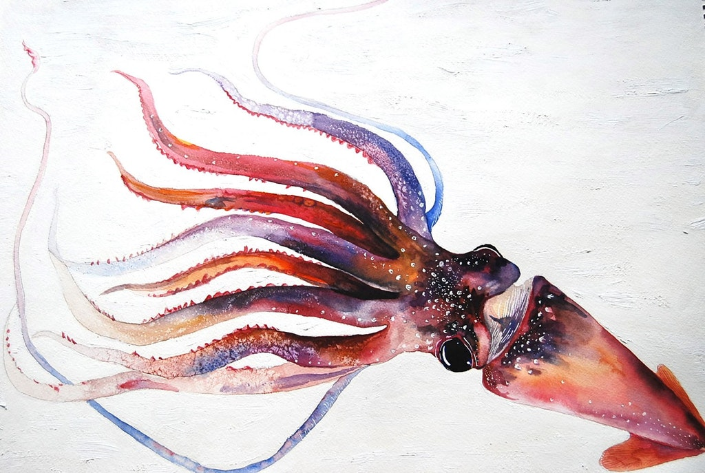 A Squid, Kristina Closs, Oil and Watercolor, 2012 - victorix58 - bit.ly2nE5Rxw