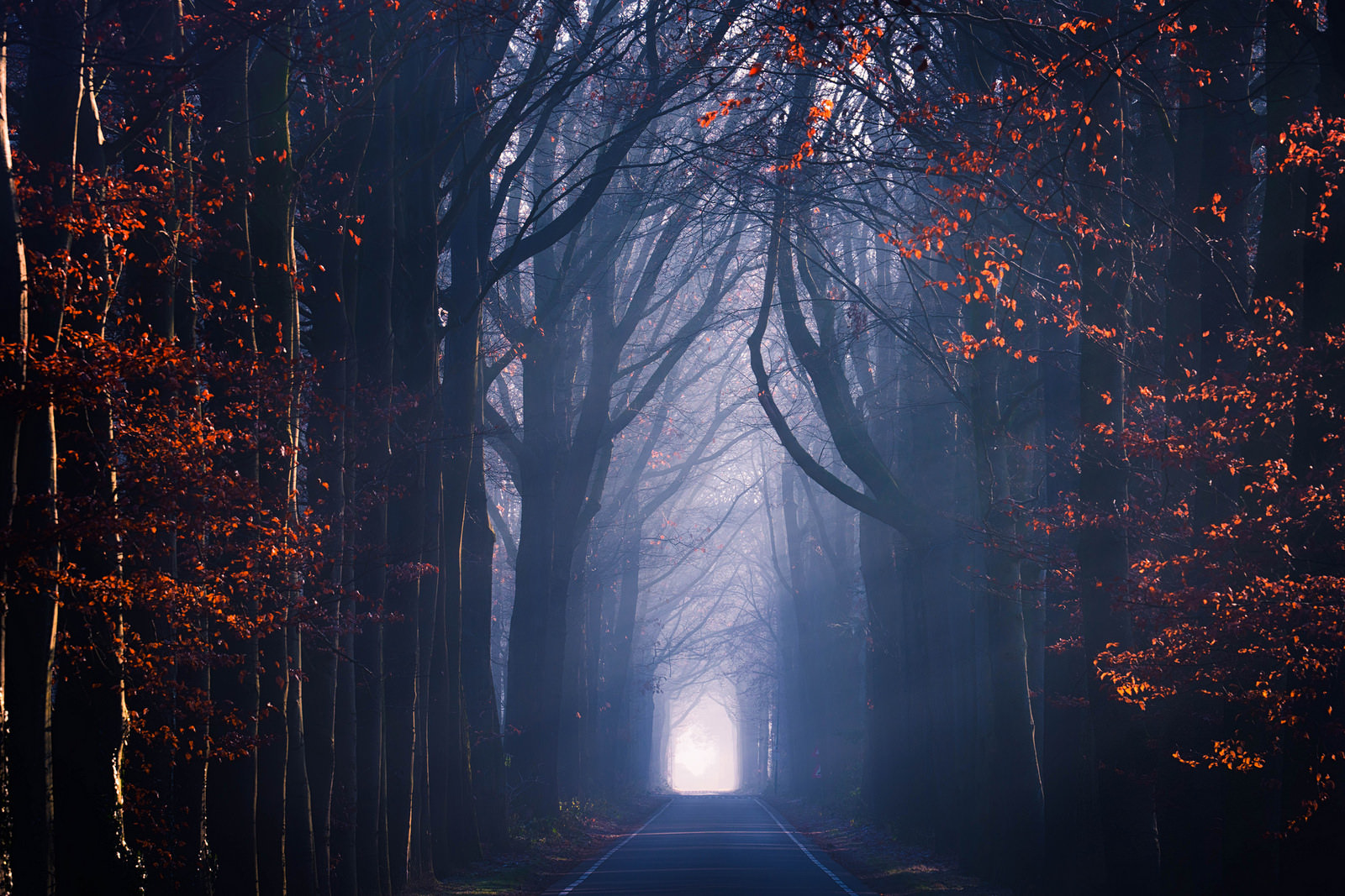 Forest road in Netherlands - arbili - bit.ly2nKwkZP