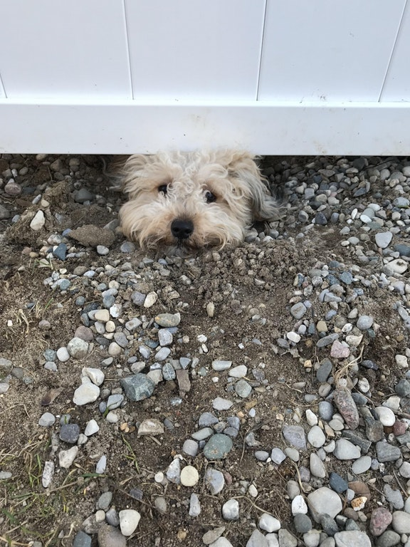 Our neighbor's dogs have dug themselves a hole under our fence so that they can watch our dogs - SplendaHulk - bit.ly2EXgLVS