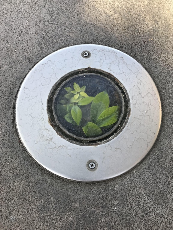 This plant growing inside a floor light fixture - cvcj510 - bit.ly2srcI2g