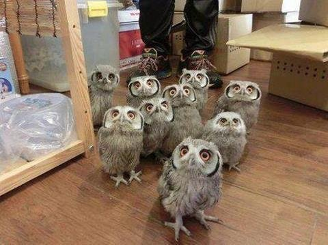 We heard there was a superb owl party - konungborligr - bit.ly2FKRePG
