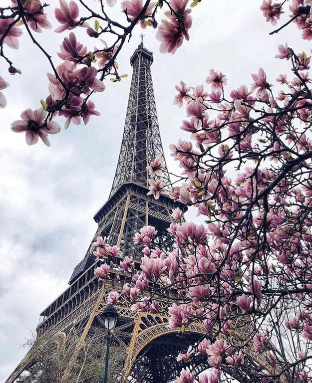 Magnolias and a Tower - iamprofoundbandit - bit.ly2Hm4VGQ