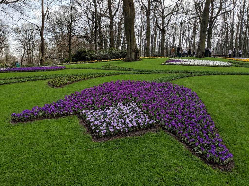 The tulips in this garden are arranged in the shape of tulips - b98765 - bit.ly2IJ9xGG