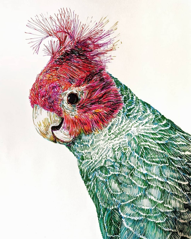 A Parrot. Colored pen - bbone83 - bit.ly2rW9ocW