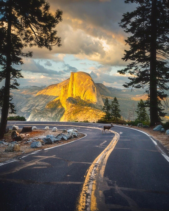 A deer crosses the road during a Glacier Point sunset. Yosemite National Park, California - walkingaswind - bit.ly2Mh2Qht