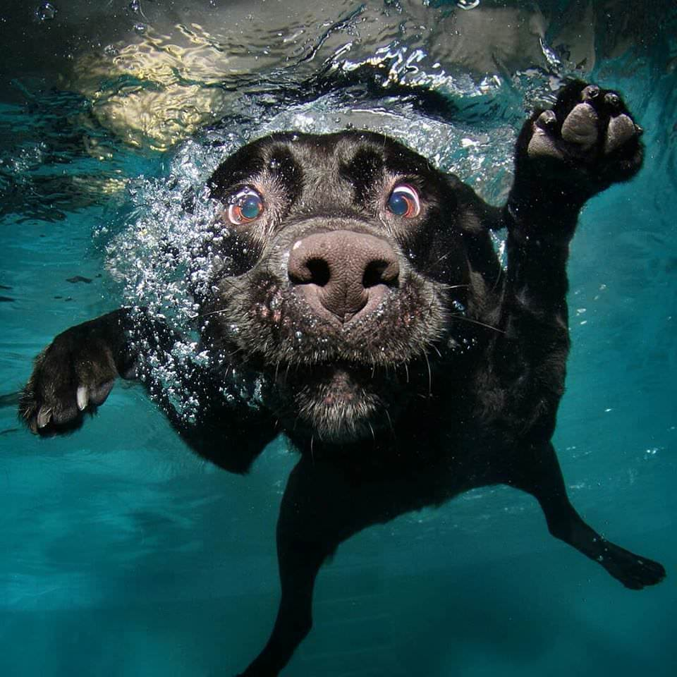 Can't stop laughing at these dogs underwater - IndyPoker979 - bit.ly2y0WVdd