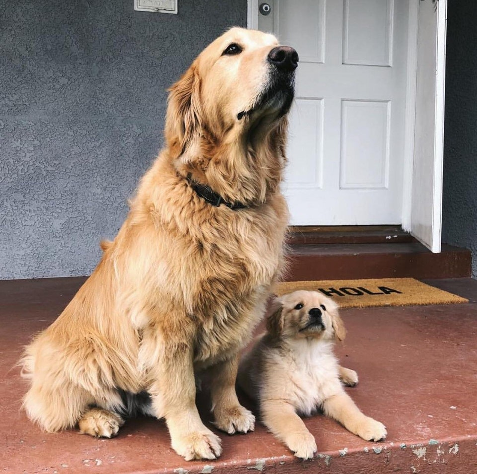 Dog showing his son how to guard the house - str1ngcheesetheory - bit.ly2K6ogAp