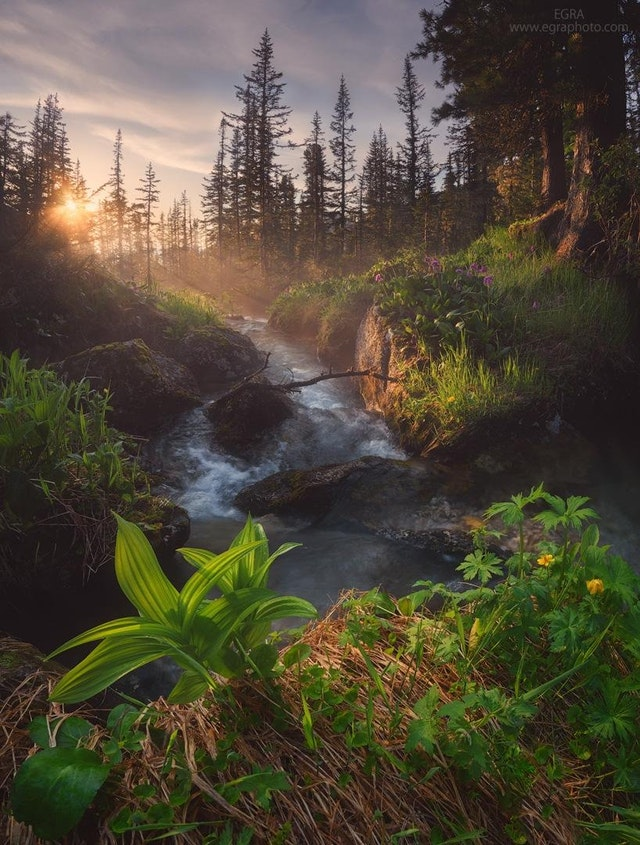 Siberian taiga after the rain - golden_an - bit.ly2MBgkVx