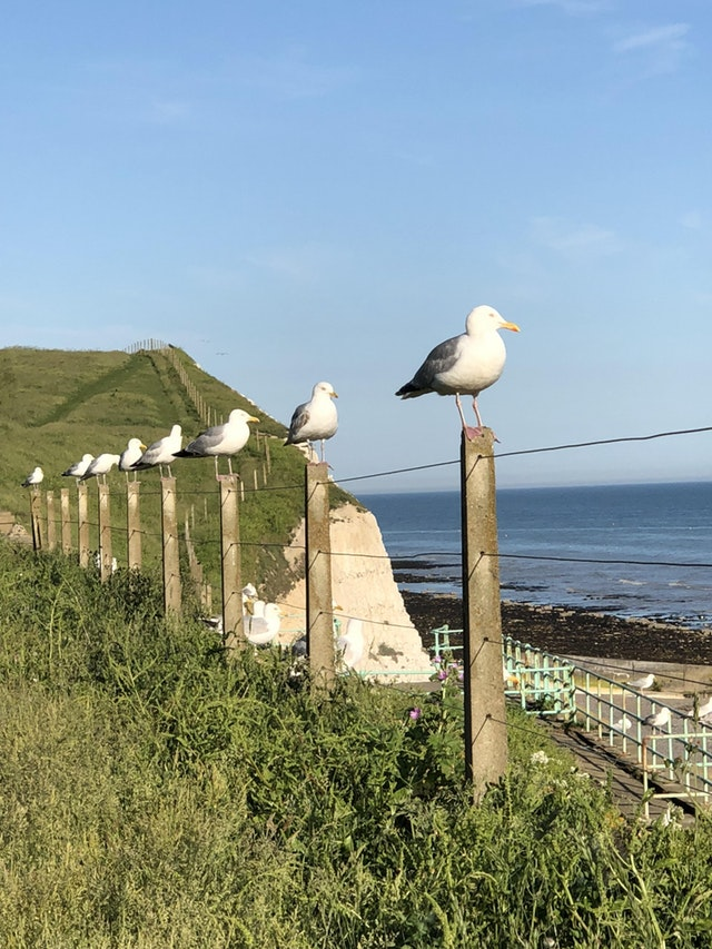 These nicely arranged seagulls. - garrardadoresit - bit.ly2JlcK39