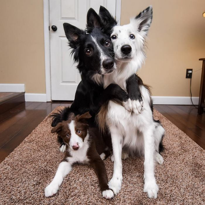 These rescue doggies can't stop hugging - Lil_devotchka - bit.ly2CfwNO6