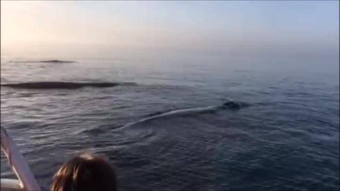 Video: Whales did a Triple Breach for tourist