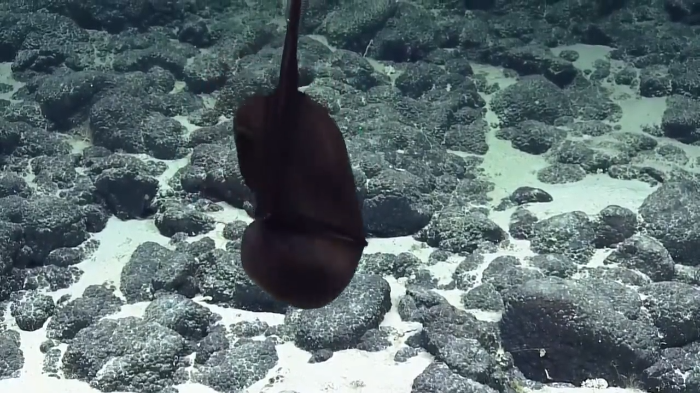 Video: See incredible transformation of this Gulper Eel