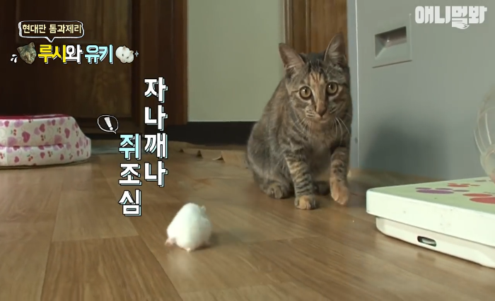 Video: Is This A Brave Hamster or A Cowardly Cat?