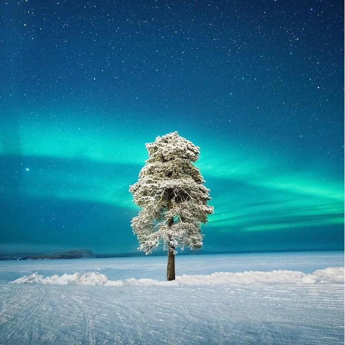 A lonely tree and aurora borealis in Lapland, Finland