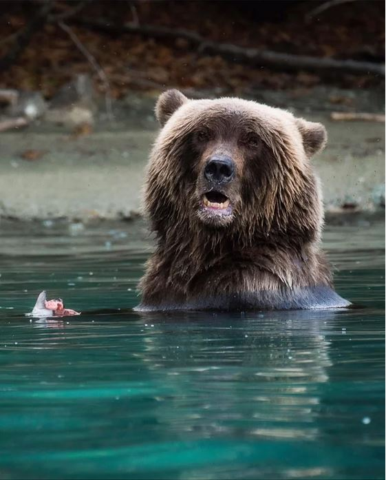 Bear at Lake Clarke, Alaska