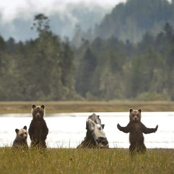 These bears look like they're about to drop a mixtape