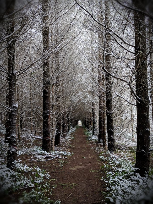 Went for a walk by my house and I think I found the path to Narnia