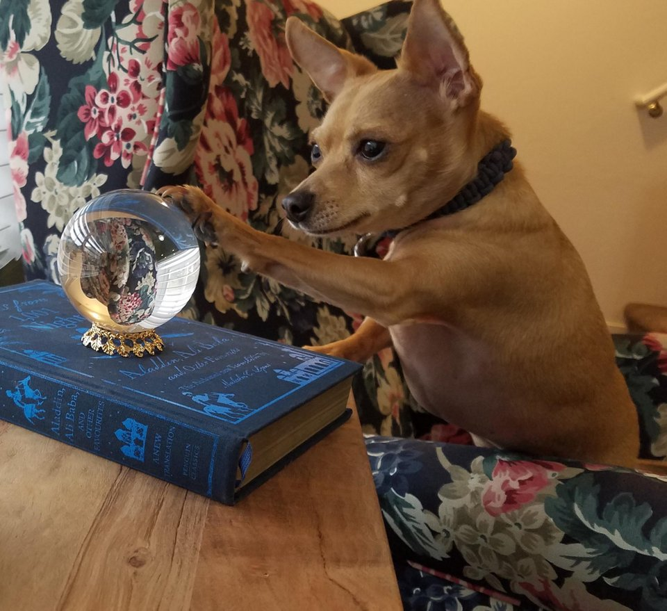 this dog looking into a crystal ball