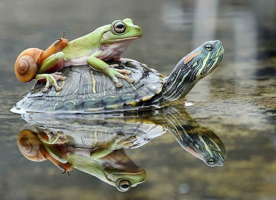 Snail-Frog-Turtle
