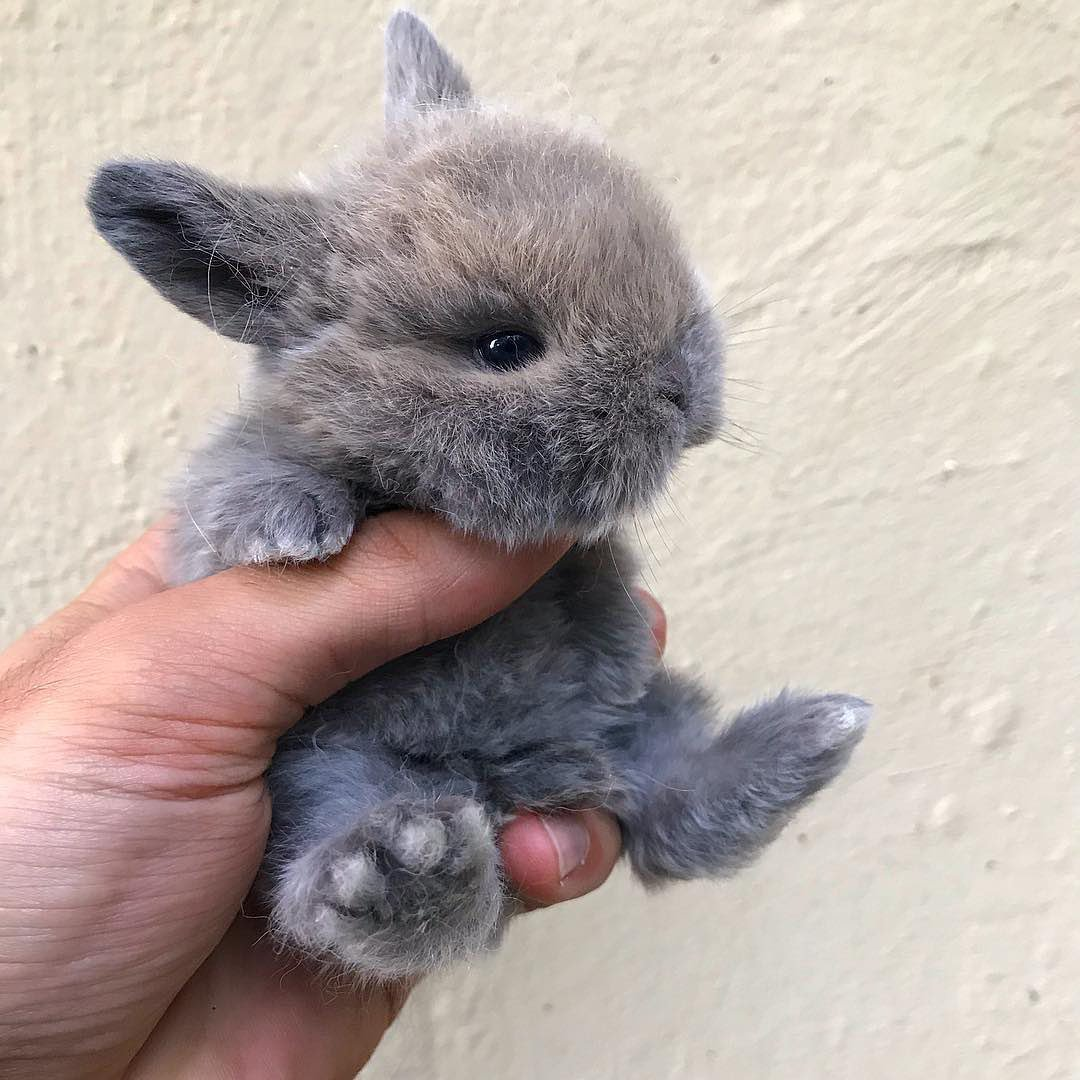 A handful of cuteness to brighten your Monday