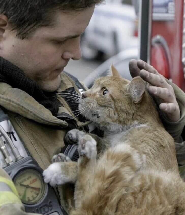Not my pic rescued kitty from a fire, look at the gratitude in those eyes
