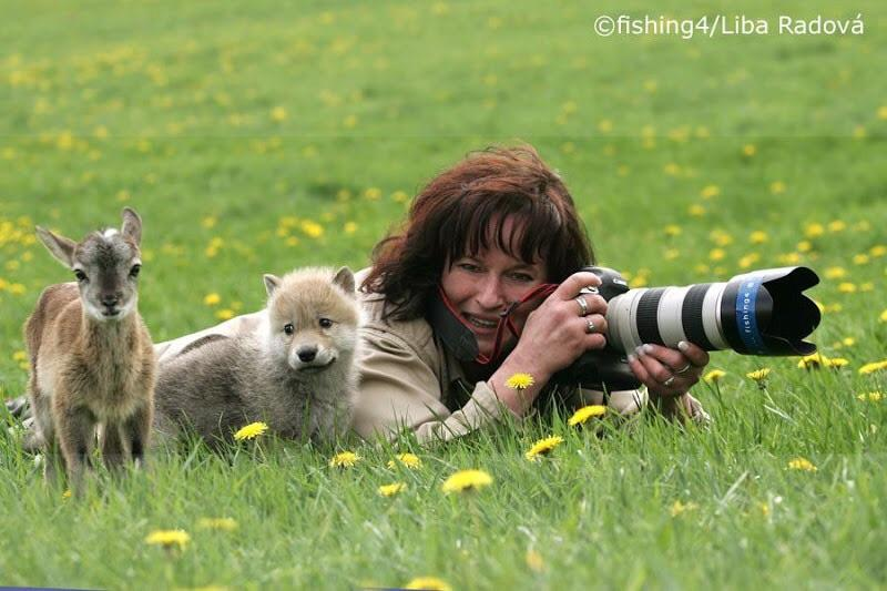 A photographer was approached by a baby deer and baby wolf while out in the field