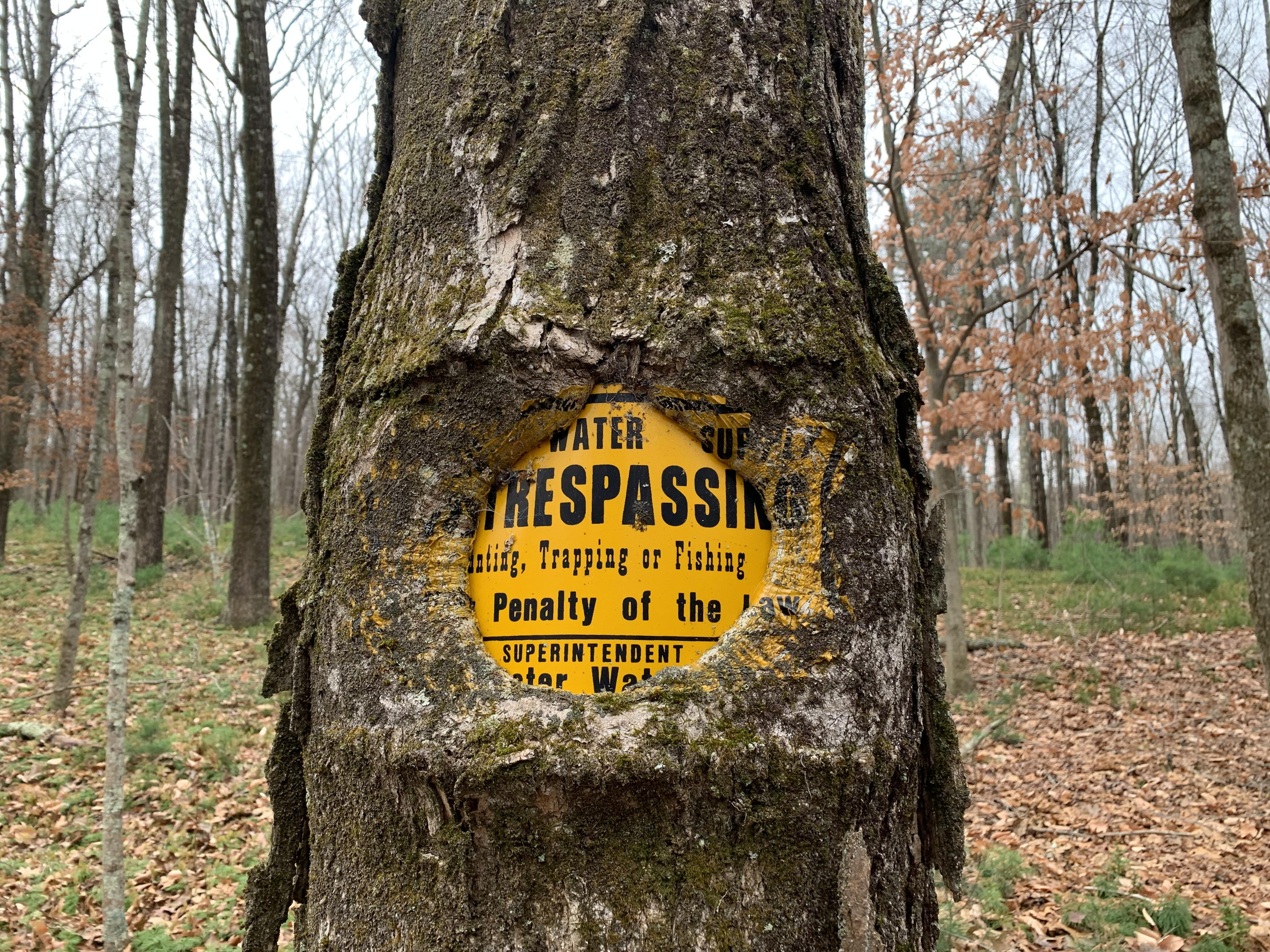This tree swallowing a trespassing sign