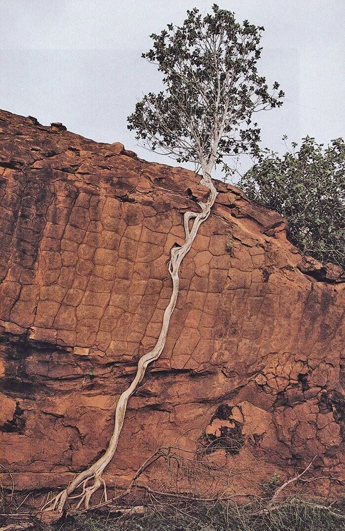 A tree with some serious will to live